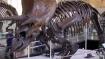 Dinosaur fossils found in Kutch region of Gujarat