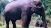 'Indian elephant stranded in Bangladesh to be tranquilised, brought back'