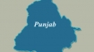 Punjab farmers opt for paddy over cotton this kharif season
