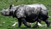3 more rhino deaths due to flood, 2 deaths by poachers