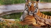 Prime area of Manas National Park freed from encroachment