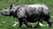 Oldest rhino at Dudhwa Park dies