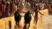 PETA to challenge President's assent to legalise <i>Kambala</i>