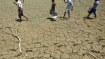 What have you done to tackle drought, HC asks Maha govt