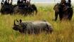 Assam: Rhino poachers shot dead in Orang national park