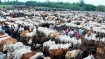Meat traders want 'buffalo' removed from ambit of new rules regulating cattle trade