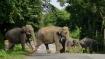 Jaipur: No elephant ride at Amber during Navratri festival