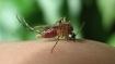 Fever grips Delhi: 146 cases of chikungunya, 87 of dengue reported so far