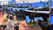 Mob thrashes 6 people over transporting buffalo calves in Delhi