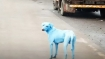 Mumbai's 'blue dog' goes blind due to toxic dye, notice issued to company