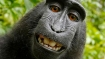 Monkey loses selfie copyright dispute against man, thanks to US court