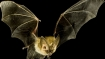 No trace of Nipah virus in Himachal clarifies officer