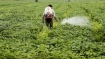Two farmers in Yavatmal hospitalised: Pesticide poisoning suspected