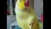 This parrot has a terrible identity crisis and it is struggling to solve its problem