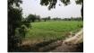 The farmers of Yamuna khadar: a manifesto for urban farming