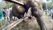 Elephant dies while trying to cross railway fence near Nagarhole