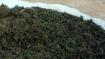 Marijuana racket busted in Hyderabad, 5 arrested