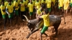 TN: With Pongal round the corner, bulls and bull tamers get ready for Jallikattu