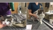 Miraculous recovery! Vets 'thaw' cat frozen in polar vertex back to life