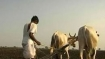 PepsiCO proposes settlement after suing Gujarat potato farmers