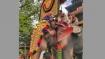 54-year-old Celebrity jumbo Ramachandran opens Thrissur Pooram festival in Kerala