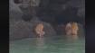 Video shows bizarre Ewok-like creatures near cave of Krabi coast