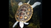 Malaysia detains Indian men attempting to smuggle over 5,000 terrapins