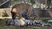 Delhi zoo to bring 3 more tigers for breeding purposes