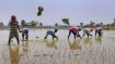 Budget hikes fertiliser subsidy to boost farming sector