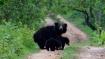 India slow in saving national parks, wildlife sanctuaries