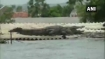 K'taka floods: Crocodile lands on roof of a house, video goes viral