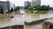 7 crocodiles rescued from flood hit Vadodara streets