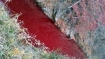 South Korean river turns red after mass pig slaughter