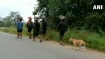 True devotee! Stray dog walks 480 km following 13 devotees to Sabarimala