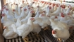 First case of bird flu detected in Delhi Zoo