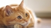 Cat found infected with coronavirus in Belgium