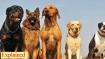 Can dogs detect COVID-19? Canines in training to sniff out virus