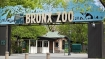 Reserves put on high alert after Bronx tiger tests positive for COVID-19