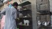 Hundreds of abandoned animals die at Pak pet markets