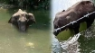 Elephants or Wild Boars: Cruel practice of trapping animals with explosive fruit should stop