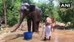 Elephants to turn crorepatis as Bihar man transfers property to elephants