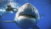 Shocking: Nearly 500,000 sharks may face slaughter for preparation of coronavirus vaccine