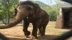 Chhattisgarh: Woman killed in elephant attack