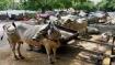 Blanket ban on cow slaughter expected in Karnataka soon