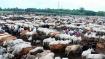 CBI court issues arrest warrant against TMC leader Vinay Mishra in cattle smuggling case