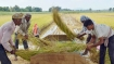 Vietnam buys rice from India for first time in decades: Report