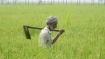 Jai Kisan Andolan launches 'MSP loot calculator' to show loss incurred by farmers
