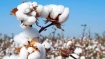 Pak decides to allow import of cotton, sugar, yarn from India