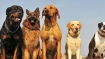 Dog's sniff could be your next COVID-19 test: Know why