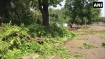 Chandigarh: High-velocity storm uproots trees, disrupts power supply
